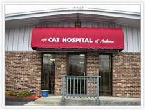 The Cat Hospital